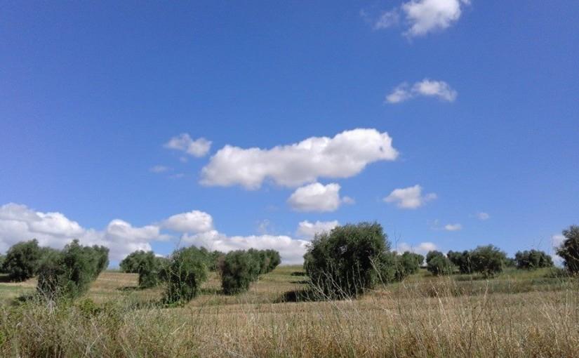 Passeggindo per la campagna maremmana si ammirano mille colori, sfumature e panorami meravigliosi. Il cielo è uno spettacolo e i campi cambiano ad ogni stagione