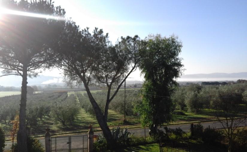è tempo di raccolta…olive